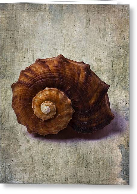 Shell Texture Greeting Cards - Sea Snail Greeting Card by Garry Gay