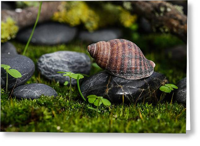 Moist Greeting Cards - Sea Snail II Greeting Card by Marco Oliveira