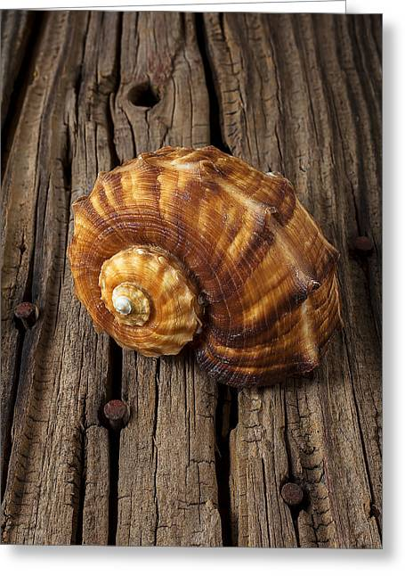 Sea Life Photographs Greeting Cards - Sea snail shell on old wood Greeting Card by Garry Gay