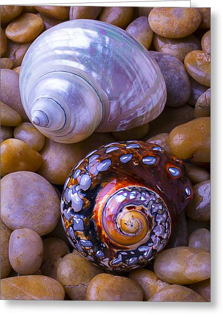 Geology Photographs Greeting Cards - Sea Snail Shells Greeting Card by Garry Gay