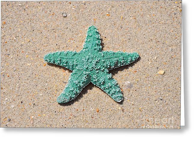 Bluegreen Greeting Cards - Sea Star - Aqua Greeting Card by Al Powell Photography USA