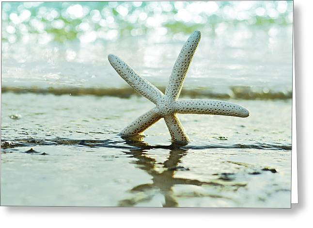 On The Beach Greeting Cards - Sea Star Greeting Card by Laura  Fasulo