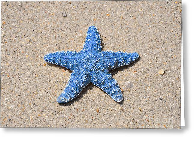 Outdoor Photography Digital Greeting Cards - Sea Star - Light Blue Greeting Card by Al Powell Photography USA