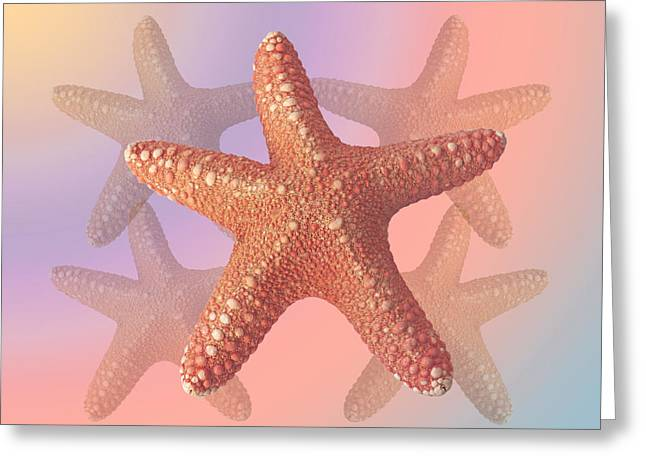 Star Fish Greeting Cards - Sea Star Pastels Greeting Card by Gill Billington