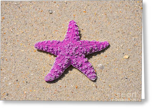 Star Fish Greeting Cards - Sea Star - Pink Greeting Card by Al Powell Photography USA
