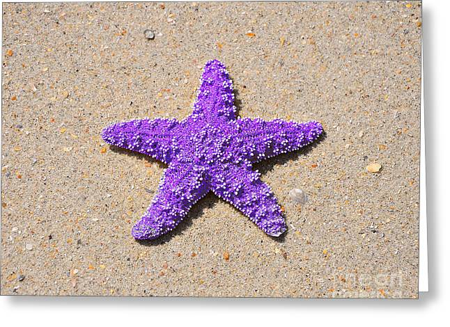 Star Fish Greeting Cards - Sea Star - Purple Greeting Card by Al Powell Photography USA