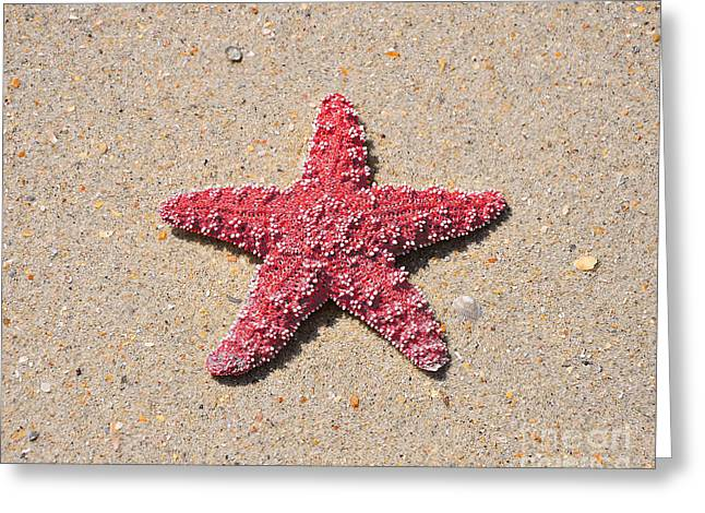 Outdoor Photography Digital Greeting Cards - Sea Star - Red Greeting Card by Al Powell Photography USA