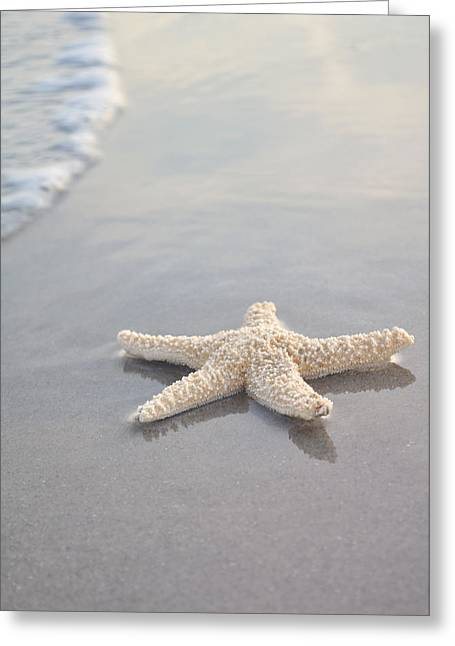 Foam Greeting Cards - Sea Star Greeting Card by Samantha Leonetti