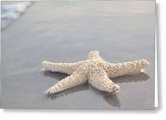 sea star Greeting Card by Samantha Leonetti
