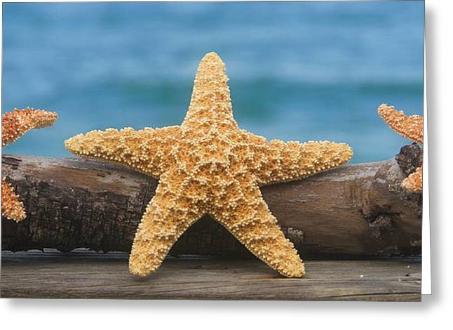 Shells Greeting Cards - Sea Star Trio on Driftwood Greeting Card by Cathy Lindsey