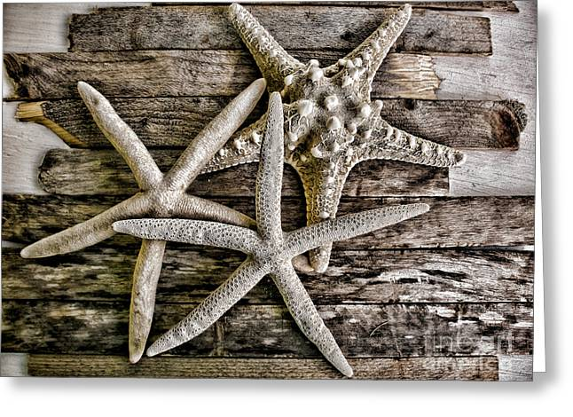Driftwood Beach Greeting Cards - Sea Stars Greeting Card by Colleen Kammerer