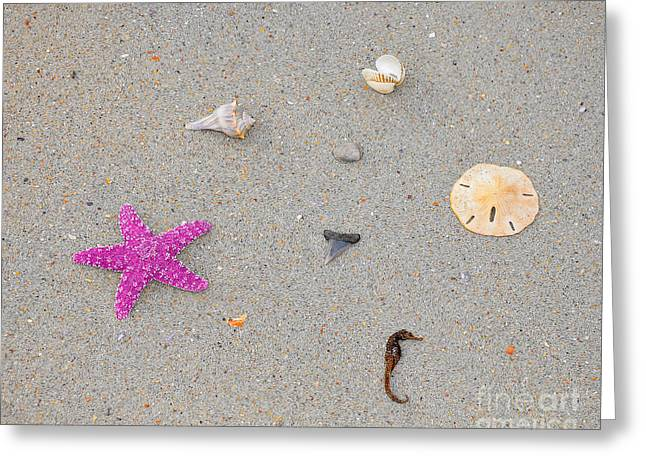 Recently Sold -  - Sea Horse Greeting Cards - Sea Swag - Pink Greeting Card by Al Powell Photography USA