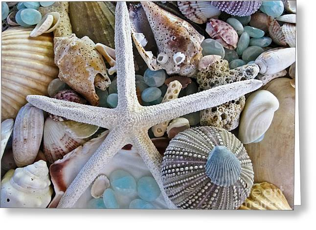 Glass Greeting Cards - Sea Treasure Greeting Card by Colleen Kammerer