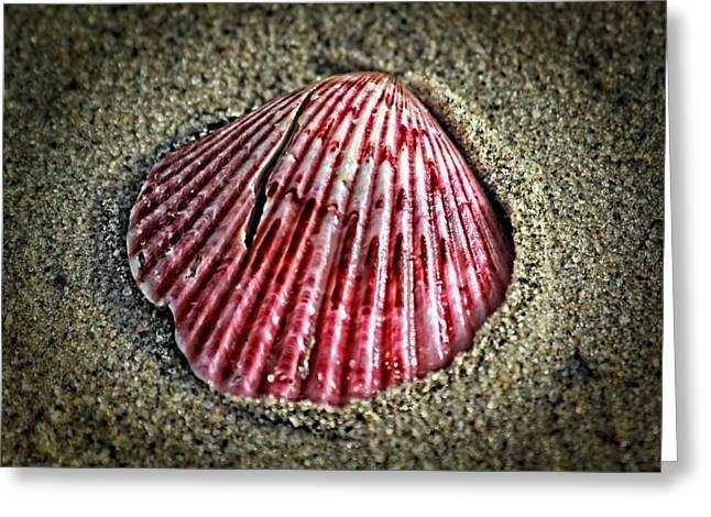 Marine Mollusc Digital Art Greeting Cards - Sea treasure Greeting Card by Eti Reid