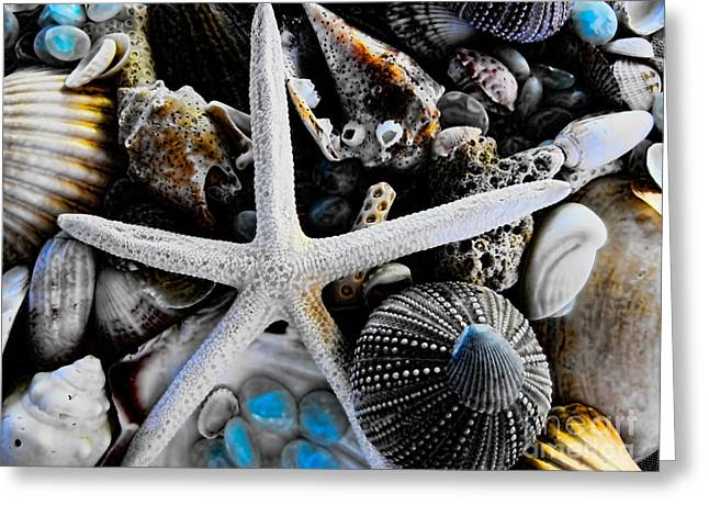 Sea Creature Photos Greeting Cards - Sea Treasure II Greeting Card by Colleen Kammerer