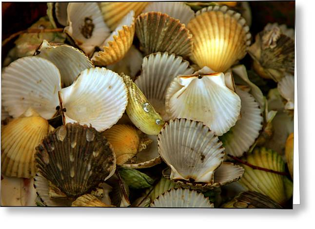 Seashell Photography Greeting Cards - Sea Treasures Greeting Card by Karen Wiles