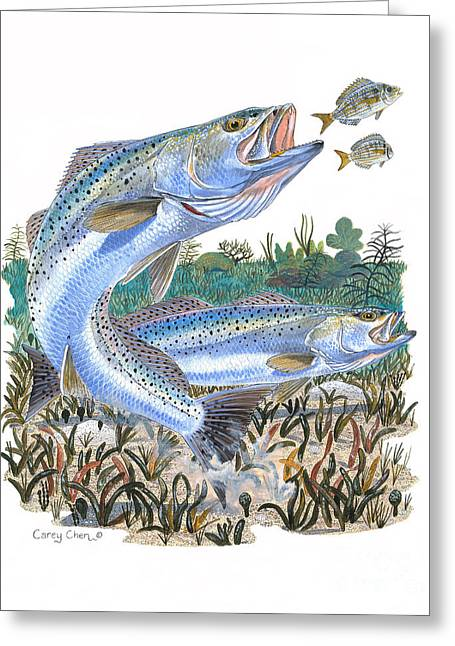 Pinfish Greeting Cards - Sea Trout Greeting Card by Carey Chen
