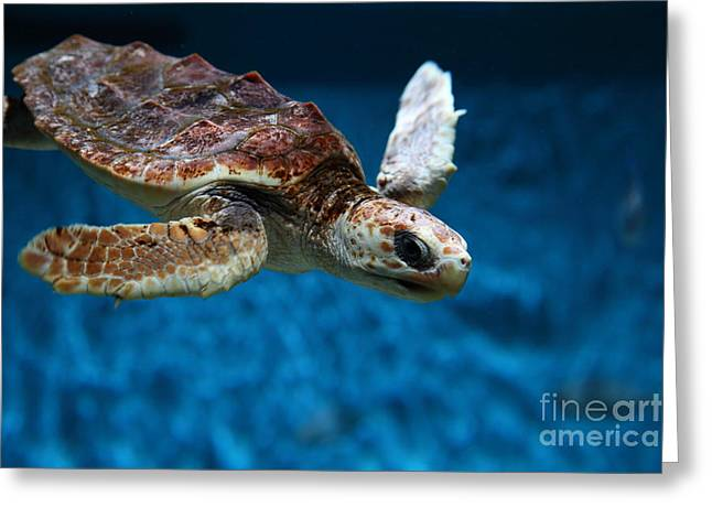 Aquarium Fish Greeting Cards - Sea Turtle 5D25079 Greeting Card by Wingsdomain Art and Photography