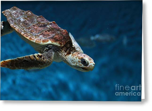 Aquarium Fish Greeting Cards - Sea Turtle 5D25081 Greeting Card by Wingsdomain Art and Photography