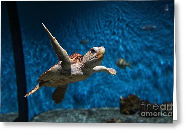 Aquarium Fish Greeting Cards - Sea Turtle 5D25085 Greeting Card by Wingsdomain Art and Photography