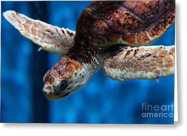 Aquarium Fish Greeting Cards - Sea Turtle 5D25093 Greeting Card by Wingsdomain Art and Photography