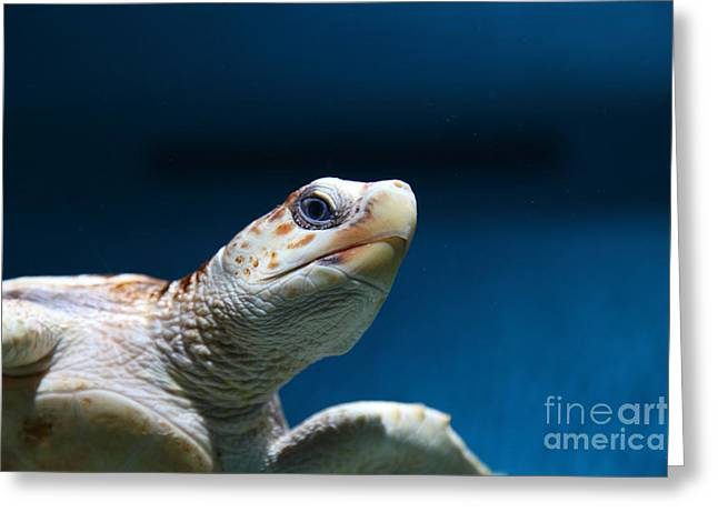 Aquarium Fish Greeting Cards - Sea Turtle 5D25094 Greeting Card by Wingsdomain Art and Photography