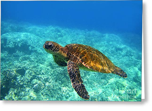 Sea Turtle Close Up Greeting Card by Bette Phelan