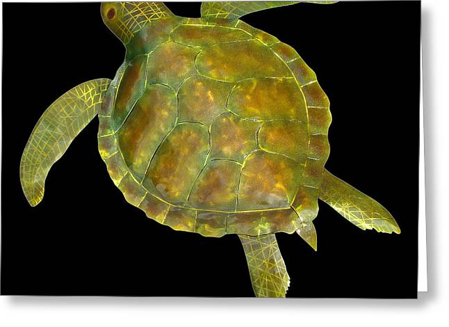 Turtle Sculptures Greeting Cards - Sea Turtle Greeting Card by Diane Snider
