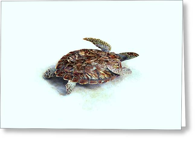 Award Mixed Media Greeting Cards - Sea Turtle III Greeting Card by Ann Powell