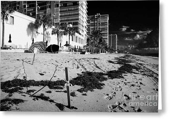 Cordoned Greeting Cards - Sea Turtle Nest Cordoned Off In Front Of Apartments Hotels And Beachfront Developments Fort Lauderda Greeting Card by Joe Fox