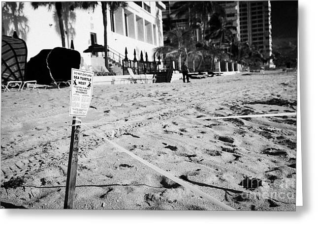 Cordoned Greeting Cards - Sea Turtle Nest Cordoned Off In Front Of Apartments Hotels And Beachfront Developments Greeting Card by Joe Fox