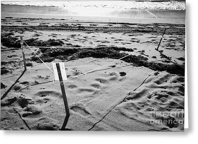 Beachfront Greeting Cards - Sea Turtle Nest Cordoned Off On Fort Lauderdale Beach Florida Usa Greeting Card by Joe Fox