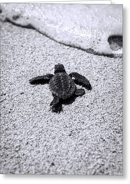 Hatching Greeting Cards - Sea Turtle Greeting Card by Sebastian Musial