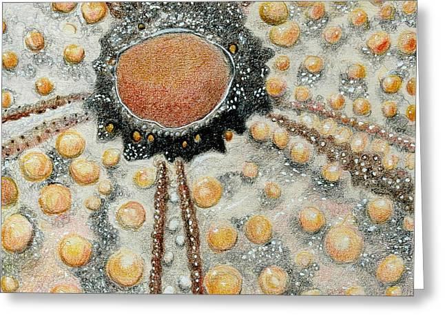 Ocean Shore Drawings Greeting Cards - Sea Urchin Greeting Card by Glenda Zuckerman