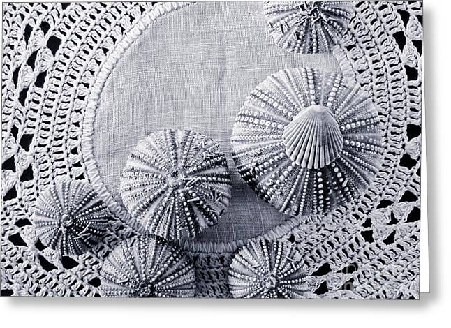 Sea Shell Art Greeting Cards - Sea Urchins on Lace Greeting Card by Colleen Kammerer