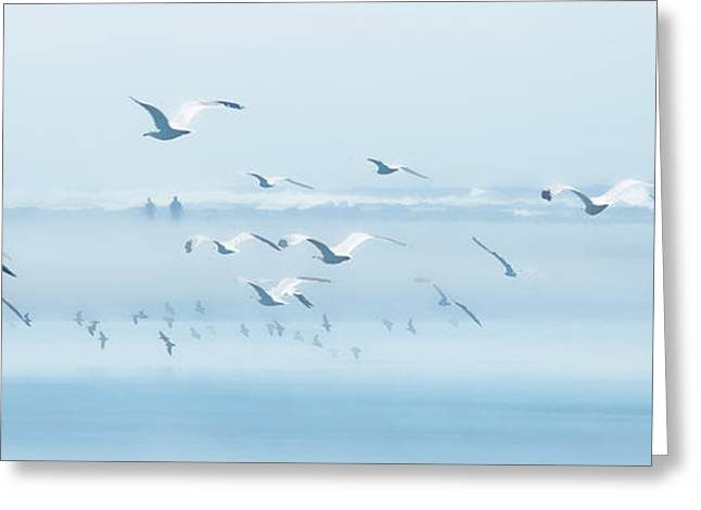 Seabirds Greeting Cards - Seabirds and Silhouettes Greeting Card by Allan Van Gasbeck
