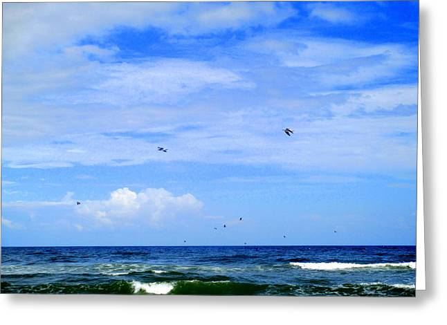 Flying Seagull Greeting Cards - Seabirds Flight Greeting Card by Randall Weidner