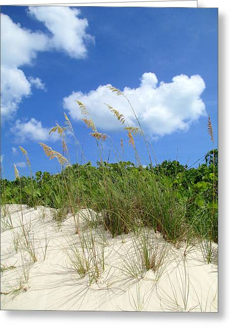 Shore Excursion Greeting Cards - Seagrass And Sky Greeting Card by Randall Weidner