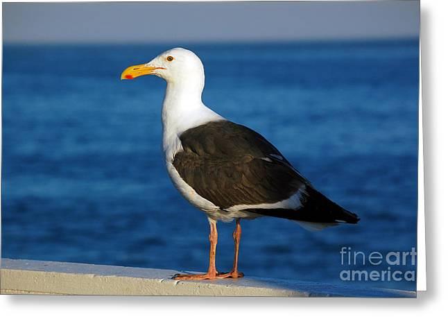 Santa Cruz Wharf Greeting Cards - Seagull 1 Greeting Card by Debra Thompson