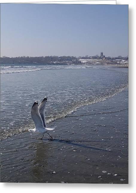 Robert Nickologianis Greeting Cards - Seagull 1 Greeting Card by Robert Nickologianis