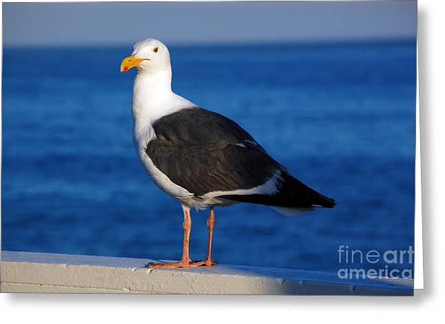 Best Sellers -  - Santa Cruz Wharf Greeting Cards - Seagull 2 Greeting Card by Debra Thompson