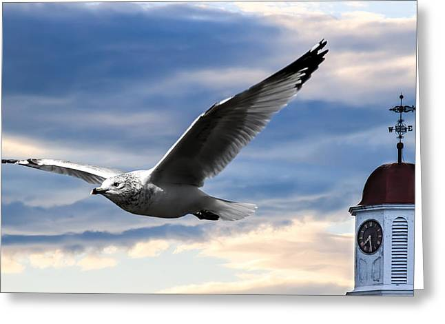 Jonathan Greeting Cards - Seagull and Clock Tower Greeting Card by Bob Orsillo