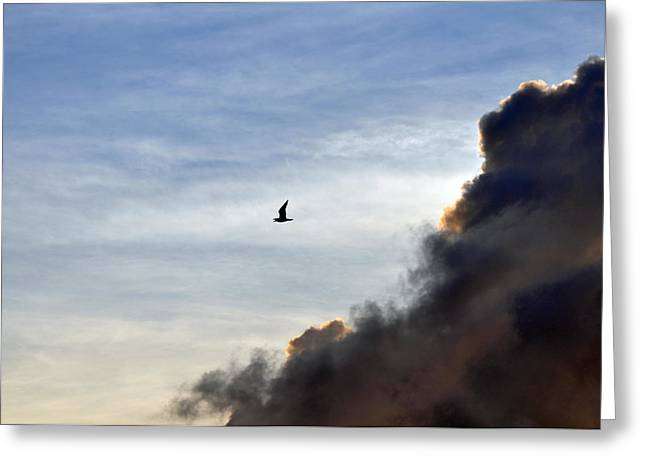 Paul Lyndon Phillips Greeting Cards - Seagull and Nags Head Clouds - c3423b Greeting Card by Paul Lyndon Phillips