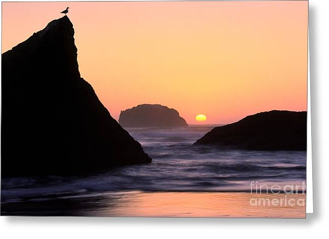 Wet Greeting Cards - Seagull and Sunset Greeting Card by Inge Johnsson