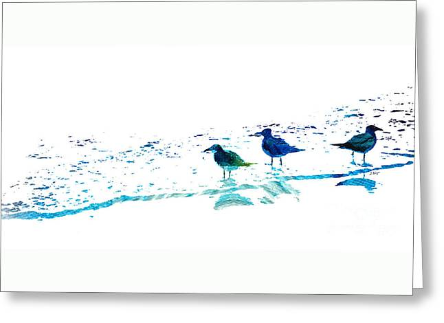 Best Sellers -  - Subtle Colors Greeting Cards - Seagull Art - On The Shore - By Sharon Cummings Greeting Card by Sharon Cummings