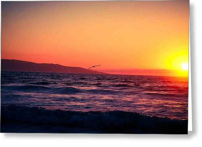 Alejandro Greeting Cards - Seagull at a Pacific Sunset Greeting Card by Alejandro Quezada