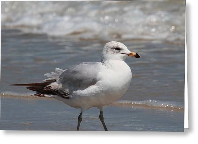 Waves Greeting Cards - Seagull at Fort Clinch Greeting Card by Cathy Lindsey