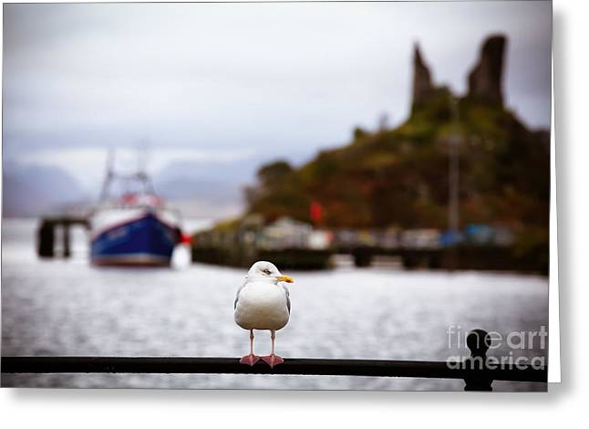 Harbour Greeting Cards - Seagull at Moil Castle Greeting Card by Jane Rix