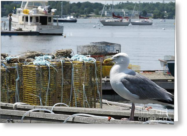 Bird Art Greeting Cards - Seagull At Rest On Lobster Box  - Digital Art  Greeting Card by Anthony Morretta