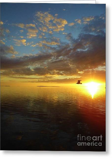 Cedar Key Greeting Cards - Seagull At Sunset Greeting Card by D Hackett
